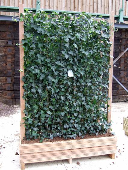 les solutions de grimpantes le prieur vegetal i d. Black Bedroom Furniture Sets. Home Design Ideas
